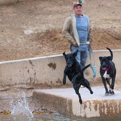 Bacterial infection on rise in Phoenix-area kills 3 dogs, sickens 50