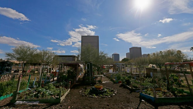 This Tuesday, Feb. 7, 2017 photo shows some of the dozens of individual gardens at a 15-acre public gardens, in Phoenix. The sprawling urban garden on a vacant lot where central Phoenix residents have grown everything from melons to okra for years has been closed as the federal government takes over the land.