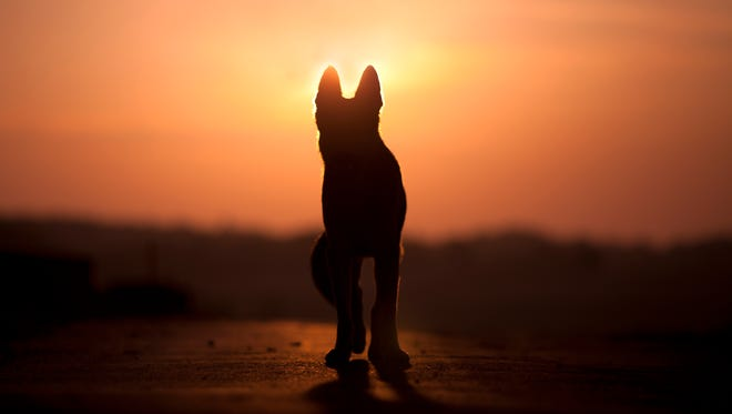 Losing a beloved pet can be a traumatic experience for many.