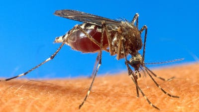 Three more cases of West Nile virus have been confirmed in Mississippi.
