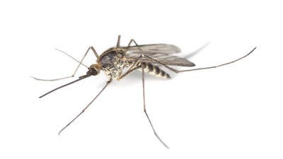 Remain diligent in taking precautions to eliminate areas where mosquitoes may breed and reduce the possibility of being bitten by mosquitoes.