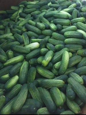 A look at some of the free cucumbers up for grabs in Ohio