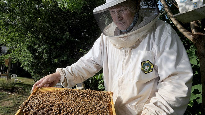 Stephen Burney of Hudson Hives at work with his honeybees.
