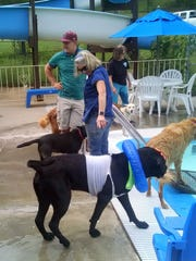 Jackson, decked out with goggles and lifesaver, prepares to enter the  Ruidoso municipal pool during the annual Dog Days of Summer Pooch Party.
