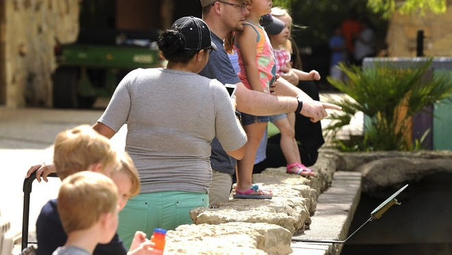 Jesse Johnson and his daughter, Amelia, 3, look at the birds on display during Zoolute to Dyess in 2016 at the Abilene Zoo.