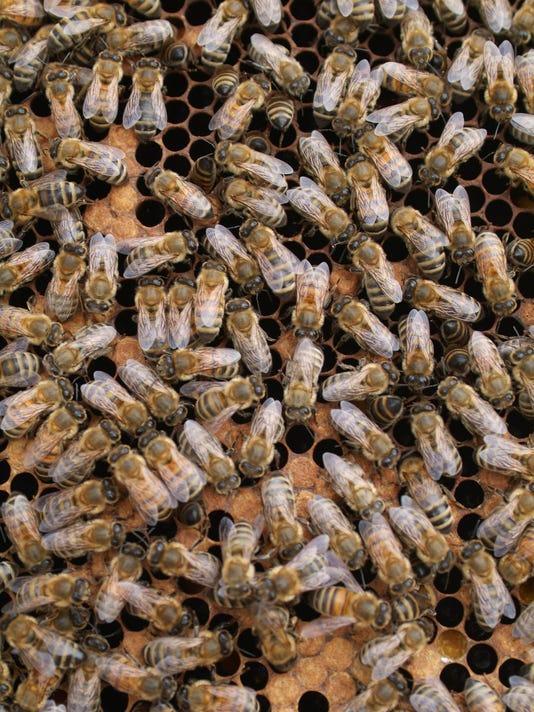 635998894905045806-TDABrd-06-11-2015-Advertiser-1-A007--2015-06-10-IMG-bees-1-1-SMB1QT2O-L626031982-IMG-bees-1-1-SMB1QT2O.jpg