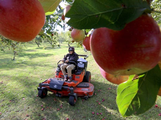 In a Thursday, Oct. 19, 2017 photo, Ken Weston, 88, operates a motorized grass mower on the grounds of Weston's Antique Apple Orchard, the business he runs with his sister, Genevieve Weston, in New Berlin, Wis.