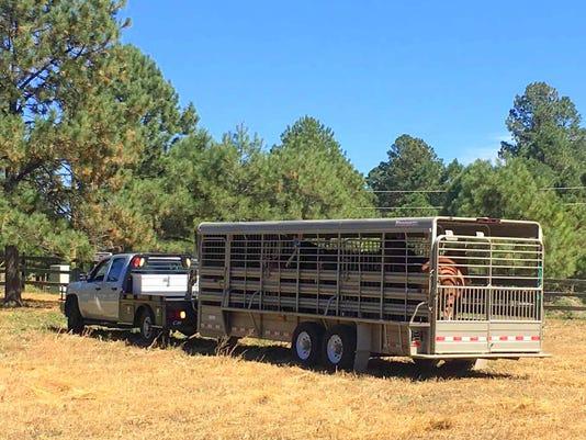 truck-pulls-in-horses-lippert
