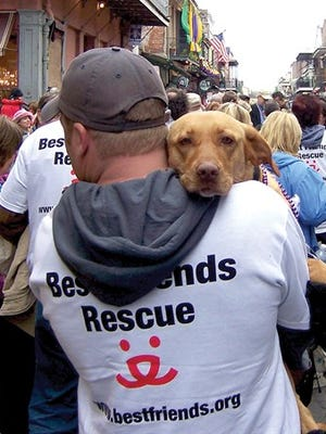 New Orleans, LA, Feb. 2006 — Members of Best Friends Rescue join the parade down Bourbon Street during Mardis Gras with some of the animals abandoned and rescued from Hurricane Katrina.