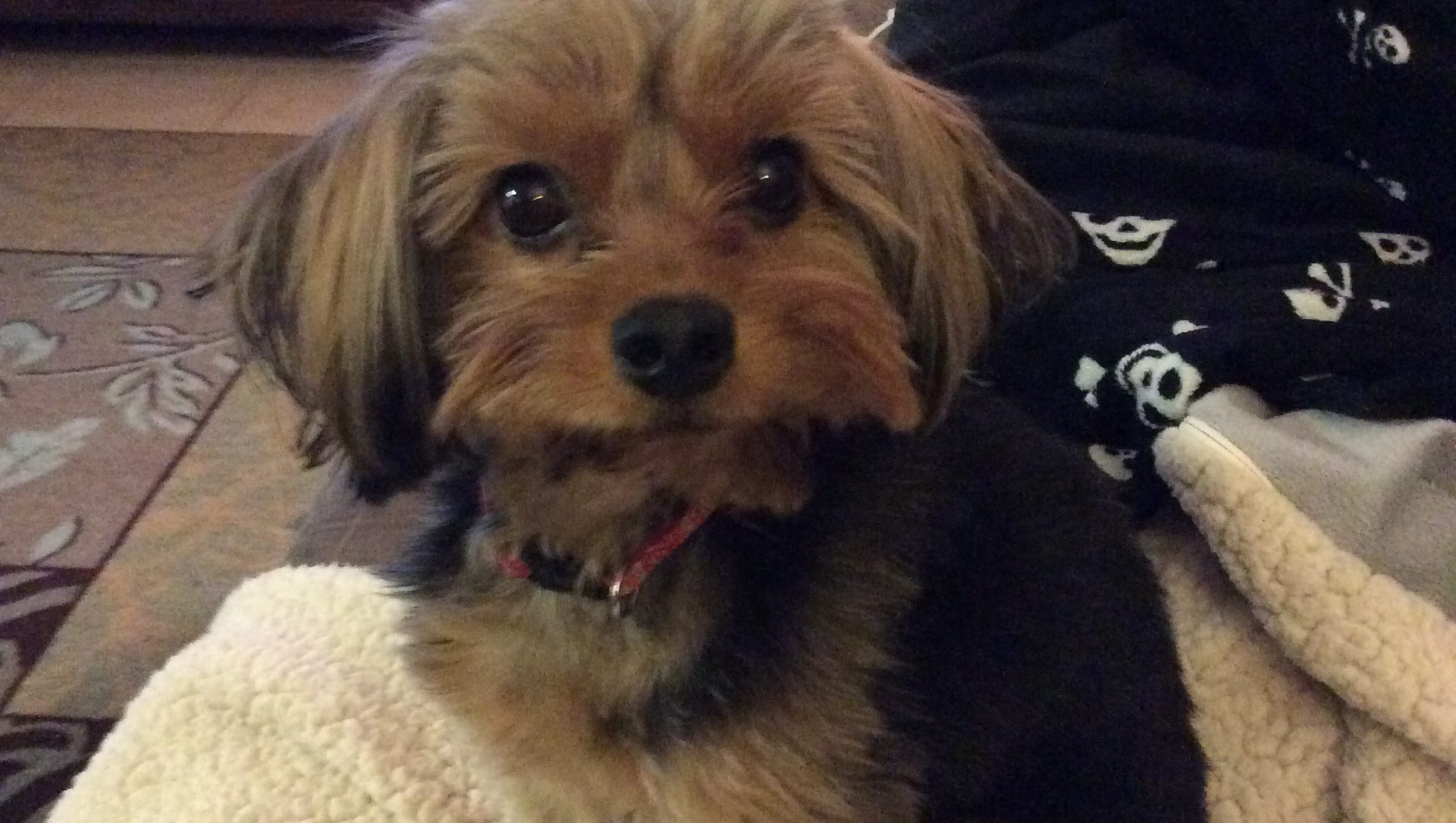 Lost Dog Reunited With Owner After Ads In Democrat Social Media