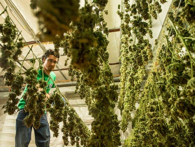 Should Arizona legalize recreational marijuana use?
