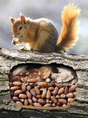 Which squirrel are you going to be? The one that finds