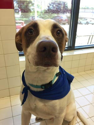 Duke is a 1-year-old hound mix who loves to snuggle and steal kisses.