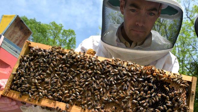Local bee farmer Jay Williams checks on his hives on his Williamson Honey Farm in Franklin, Tenn.