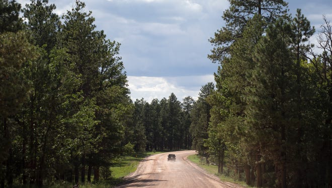 A view of Forest Road 300, not far from Arizona Highway 260, on July 29, 2014.