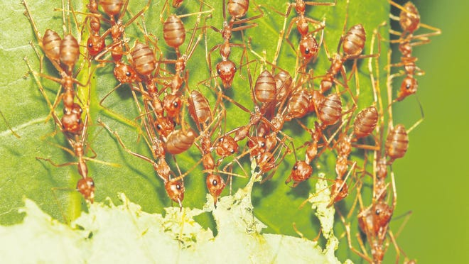 The key to keeping ants out is to make your home less open and attractive.