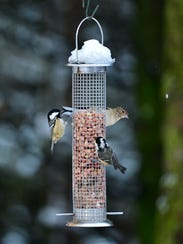 The cold weather has meant a lot of hungry birds at