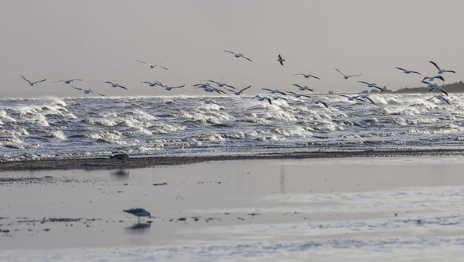 A group of white pelicans takes to the air as the wind creates choppy conditions at the Salton Sea, May 20, 2016. w