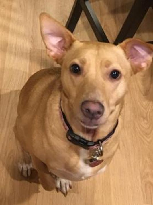 Lost dog Lily