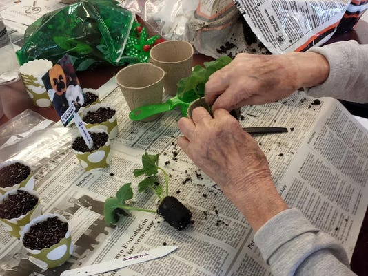 Horicultural Therapy Week Planting Pansy Seeds and Geranium Plugs.jpg