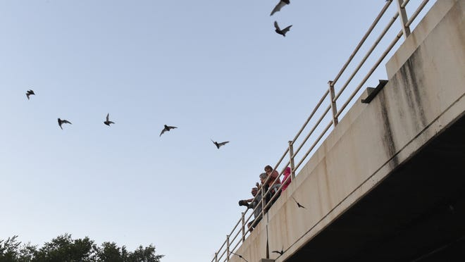 People watch bats fly from their perches under the McCarran Blvd. bridge over the Truckee River in Sparks on Wednesday, August 13, 2014.