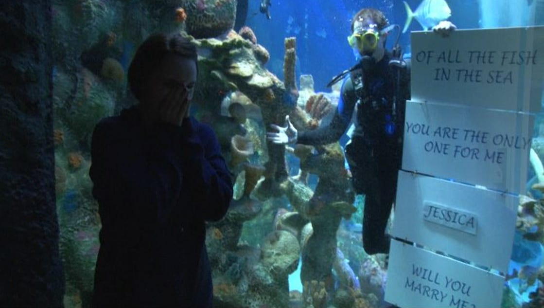 Diver Proposes From Inside Tempe Shark Tank