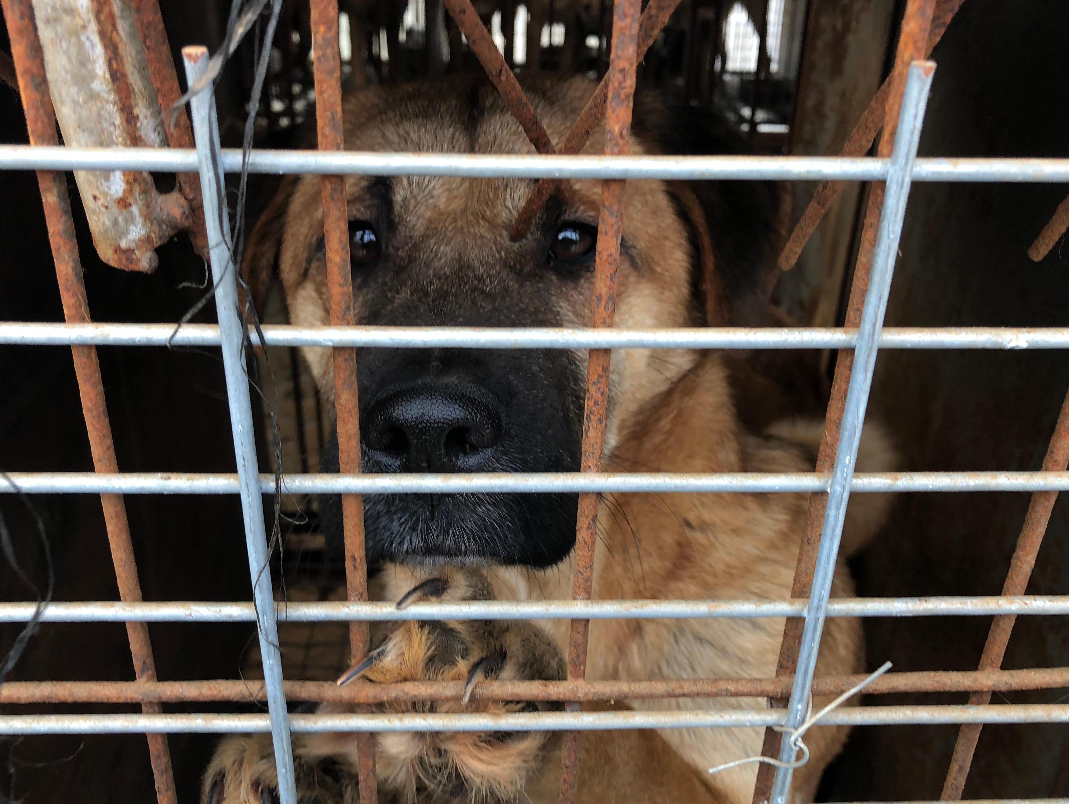 Inside the grim scene of a Korean dog meat farm, just miles from the Winter Olympics