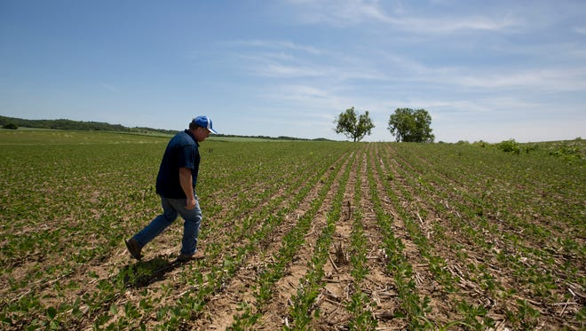 Scott Travis walks over some of the soy beans and corn that he farms in Taylor County, Ky. Travis and other farmers try and limit polluntants from washing off their land and into nearby streams. June 1, 2017
