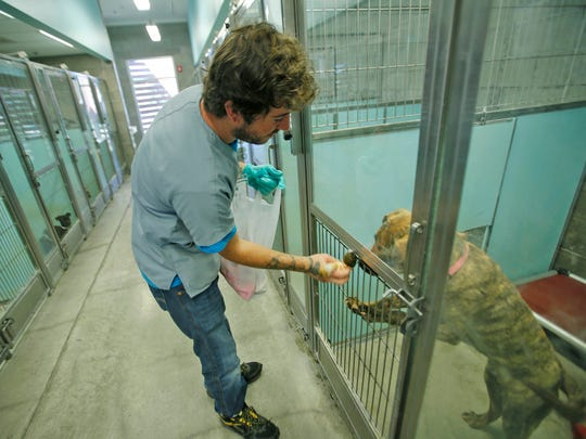 Zandy Hensley, a kennel technician at the Farmington Regional Animal Shelter, hands out toys to dogs on Tuesday at the shelter. The shelter has stopped making dogs available for adoption because of an out outbreak of parvovirus.
