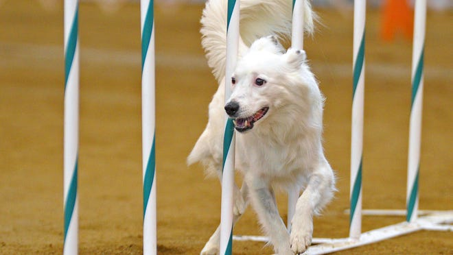 """Hunter competes in an agility dog competition. Owner Kathryn Dobyns recalls adopting a pet who was """"afraid of everything."""""""