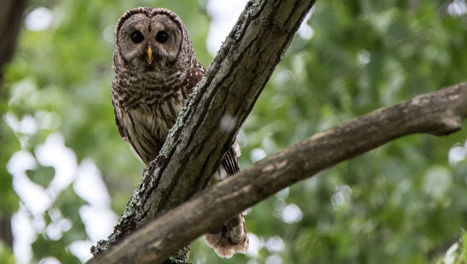 Nature photographs by Stephen Weddle will go on display at Cope Environmental Center on Nov. 16.