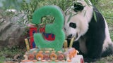 The National Zoo celebrated Bei Bei the famous panda's 3rd birthday with an icy treat.