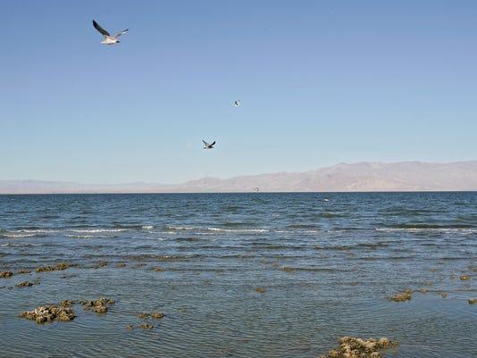 -salton sea birds1.jpg_20141009.jpg