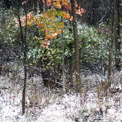 A bit of autumn and a bit of winter in Vestal, NY on