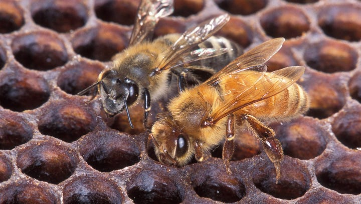 Killer bees DO want to sting you. Know these Africanized-bee safety tips.