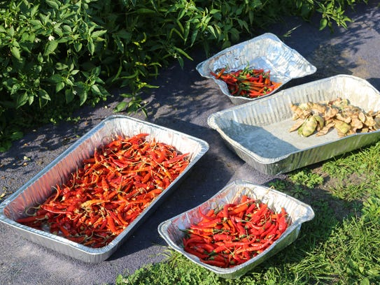 Bandhu Gardens' peppers and broad beans dry in the