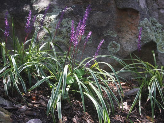 Picking Plants For Problem Areas In The Garden