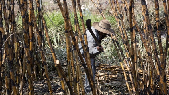 Worker Josefino Gonzalewz, 69, cuts sugar cane during the harvest for the Emiliano Zapata sugar mill in Zacatepec, Mexico, on Tuesday, May 20, 2014.