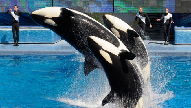 SeaWorld has been struggling to maintain attendance ever since the film Blackfish put light on the company's alleged mistreatment of animals.