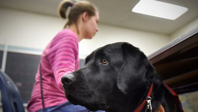 Student Meg Schneider and her service dog Quest attend classes Friday, Jan. 22, at Apollo High School in St. Cloud.