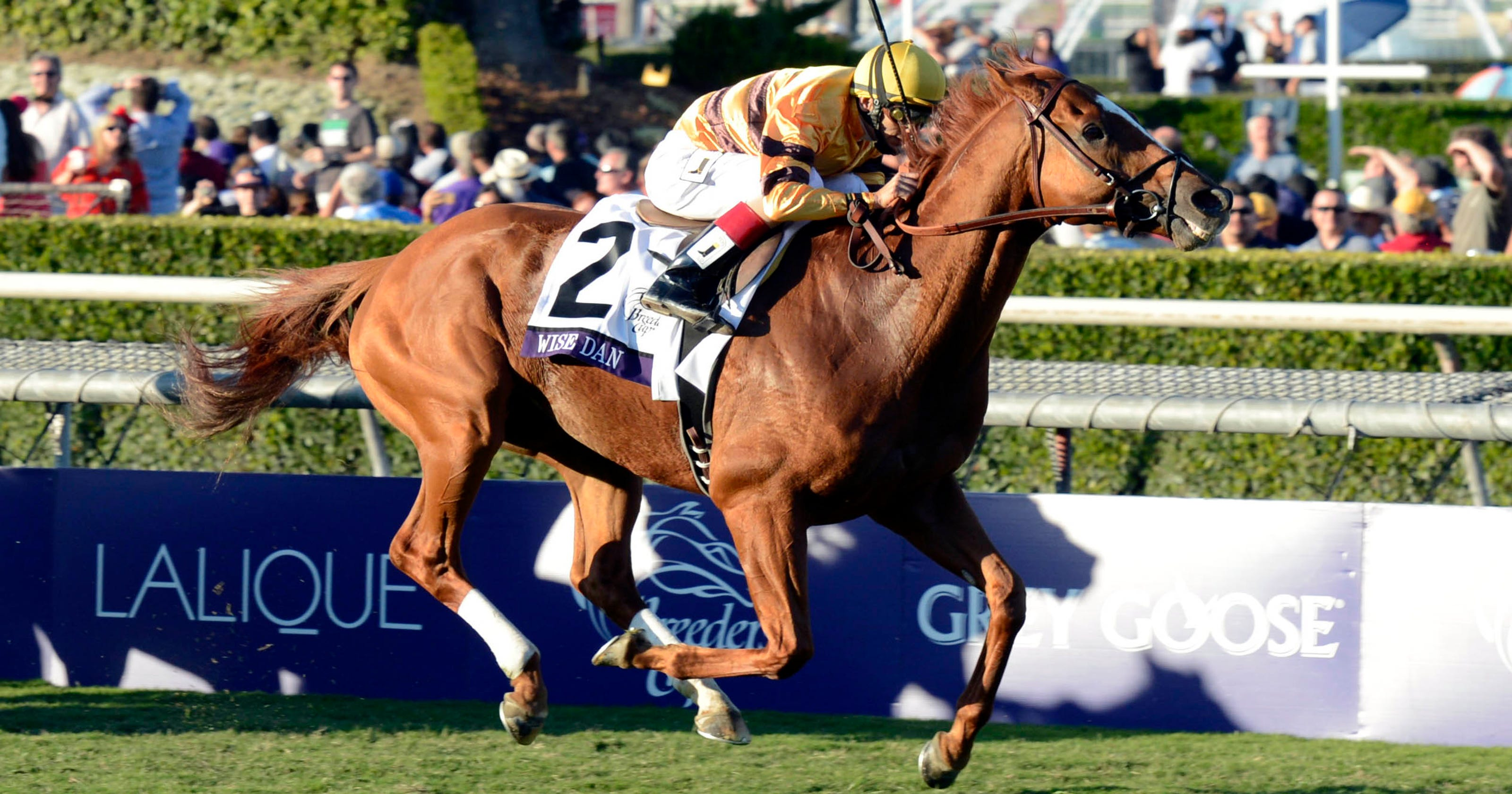 Horse of the Year is an easy choice: Wise Dan