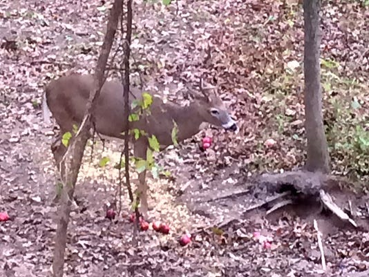 deer-baiting.jpg