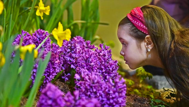 Ella Ferrone, 7 of Fairfax, enjoys the fragrance at the 2015 Vermont Flower Show at the Champlain Valley Expo in Essex Junction on Friday, February, 27, 2015, the first day of the weekend-long exhibition.