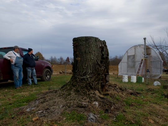 "Steve Robinson, left, and Jesse Larkins take a few minutes to shoot the breeze after working on Larkins' newest greenhouse in Owensville, Ind., Tuesday afternoon. The rotted-out maple stump was planted by Larkins decades ago.""I planted all these trees,"" Larking said. ""Every tree here."""