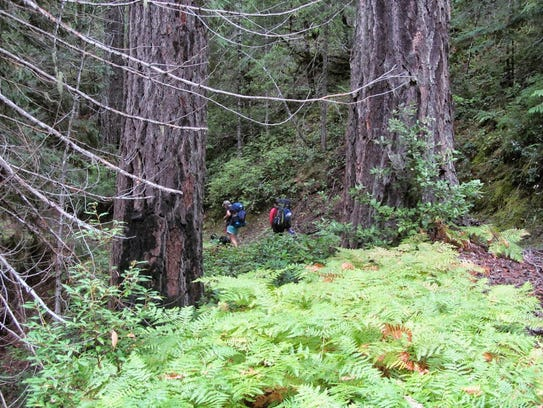 Old-growth forest on the Panther Ridge section of the