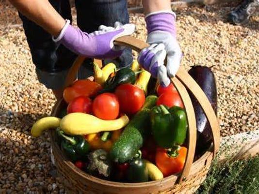 food safety harvest.jpg