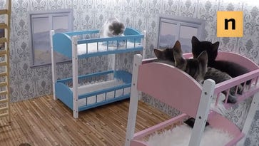 """""""Keeping up with the Kattarshians"""" kitties lounge in bed."""