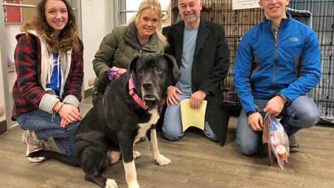 In this Dec. 24, 2017 photo provided by the Kansas City Pet Project in Kansas City, Mo., Polina, a Mastiff mix poses with shelter staffers, from left, Shannon Flagg, Madison Young and two members of her new family. After 445 days at the K. C. Pet Project shelter, where more than 10,000 pets pass through annually, Polina was finally adopted on Christmas Eve. After a Kansas City Star story about Polina ran, several people stepped forward to adopt Polina. Ultimately, she went to a Kansas City home where she can roam 3 acres of land and sleep on a large, warm bed.