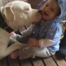 Dog gives baby some kisses