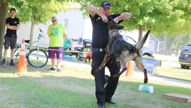 "Deputy George Dorsey, of the Sandusky County Sheriff's Office, works with his K-9 partner, Hayes, during a demonstration at ""Woof-Fest"" in Lindsey on Saturday."